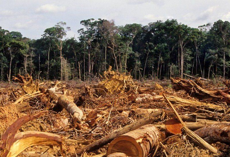 Dez medidas contra o desmatamento que só dependem do presidente