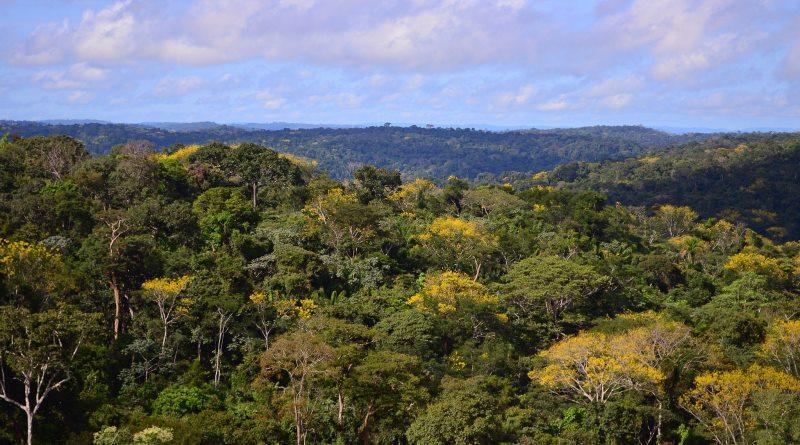 Pesquisa mostra que executivos da América Latina começam a enxergar lucro na agenda ambiental