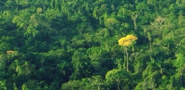 Governo edita nova MP que altera o Código Florestal