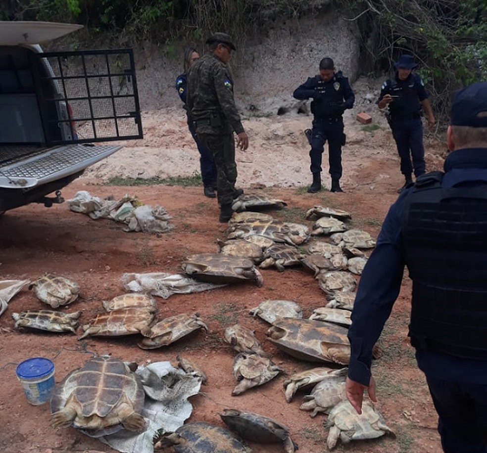 Tartarugas são resgatadas durante fiscalização ambiental