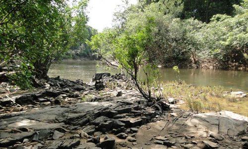 Três projetos de concessões florestais no AM incluídos no PPI