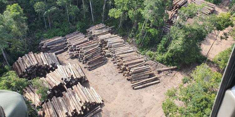 PF faz a maior apreensão de madeira ilegal da história do Brasil