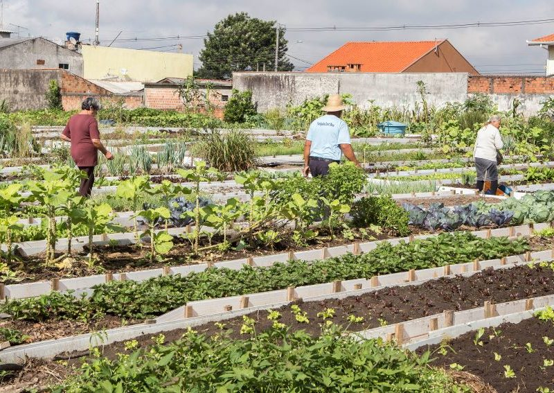 Promulgada lei que institui programa de incentivo à criação de hortas comunitárias em Porto Velho