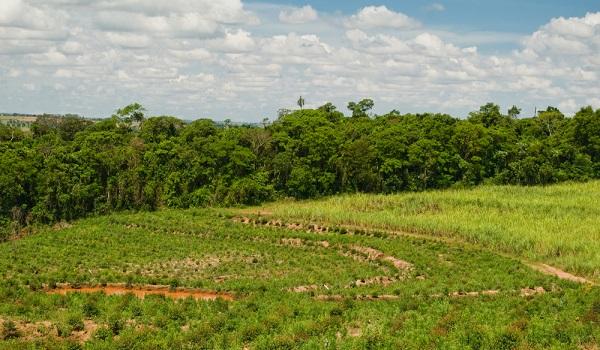 Boa notícia: vetos de Bolsonaro à lei de pagamentos por serviços ambientais são derrubados